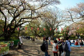 013_Ueno Park_04042013