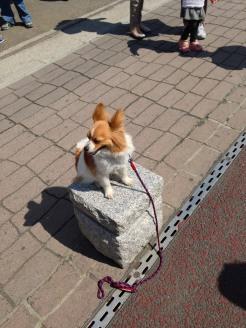 Patient Pup