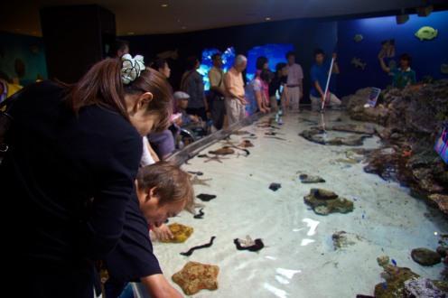 043_Okinawa Expo Park_05242013