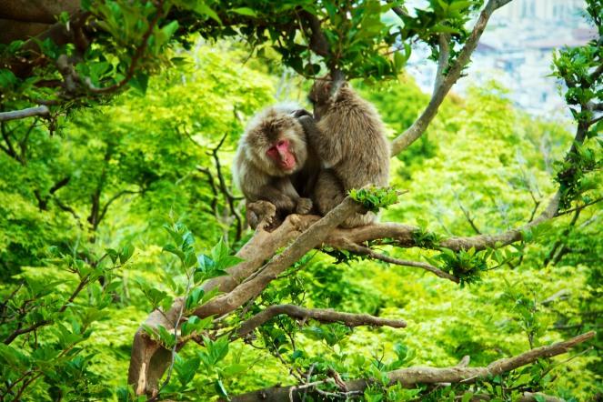 087_Arashiyama_05032013