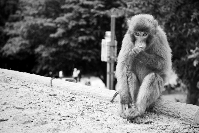 109_Arashiyama_05032013 - Version 2