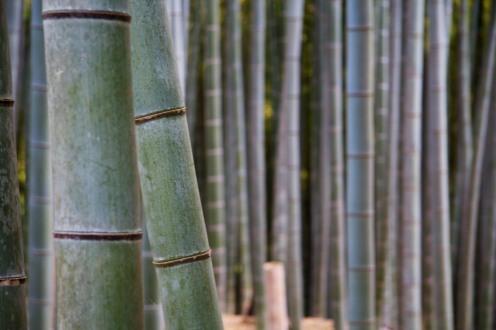 110_Inari Shrine_05022013