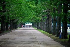 043_Showa Kinen Park_06232013